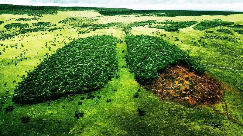 M.S.M Sutrio lavorazioni legno sostenibili